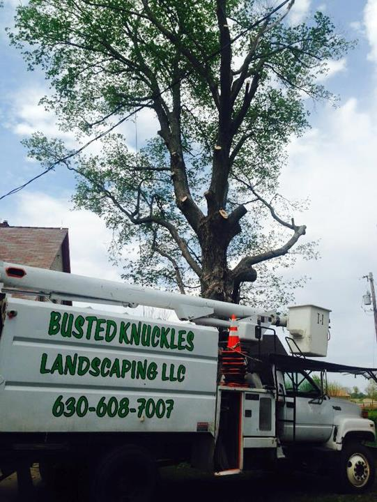 Busted Knuckles Landscaping, L.L.C. - Tree Service - Somonauk, IL - Thumb 6