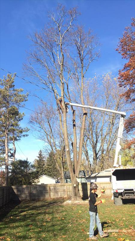 Busted Knuckles Landscaping, L.L.C. - Tree Service - Somonauk, IL - Thumb 3
