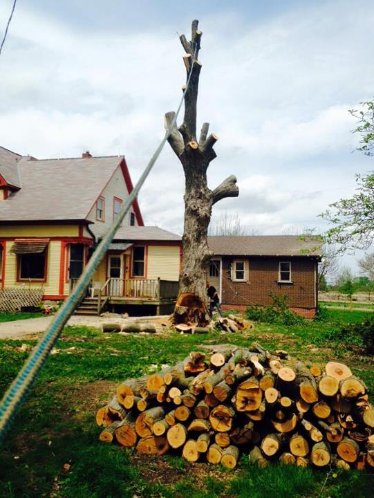 Busted Knuckles Landscaping, L.L.C. - Tree Service - Somonauk, IL - Thumb 5